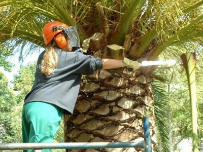 20070913143353-20070913-480-160-ayuntamiento-organiza-cursos-talleres-de-cocina-y-jardineria.-f.jpg
