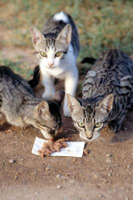 LA ASOCIACIÓN PROTECTORA DE ANIMALES DE ALZIRA DENUNCIARÁ AL AYUNTAMIENTO ANTE EL SINDIC DE GREUGES
