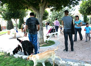 LACUA, ASSOCIACIÓ PROTECTORA D'ANIMALS, HA REALITZAT UNA CONCENTRACIÓ AL PARC DE L'ALQUENENCIA D' ALZIRA