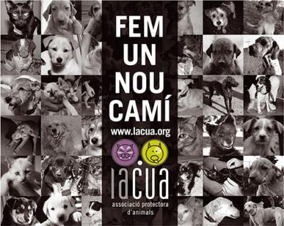 BREU PRESENTACIÓ DE LACUA, ASSOCIACIÓ PROTECTORA D'ANIMALS A ALZIRA