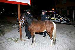 LA POLICÍA NACIONAL EVITA QUE TRES CABALLOS CAUSEN INCIDENTES GRAVES EN ALZIRA