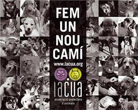 """LACUA, ASSOCIACIÓ PROTECTORA D'ANIMALS DE ALZIRA, SALDRÁ EN EL PROGRAMA """"GUAMIPI"""" DE CANAL 9"""